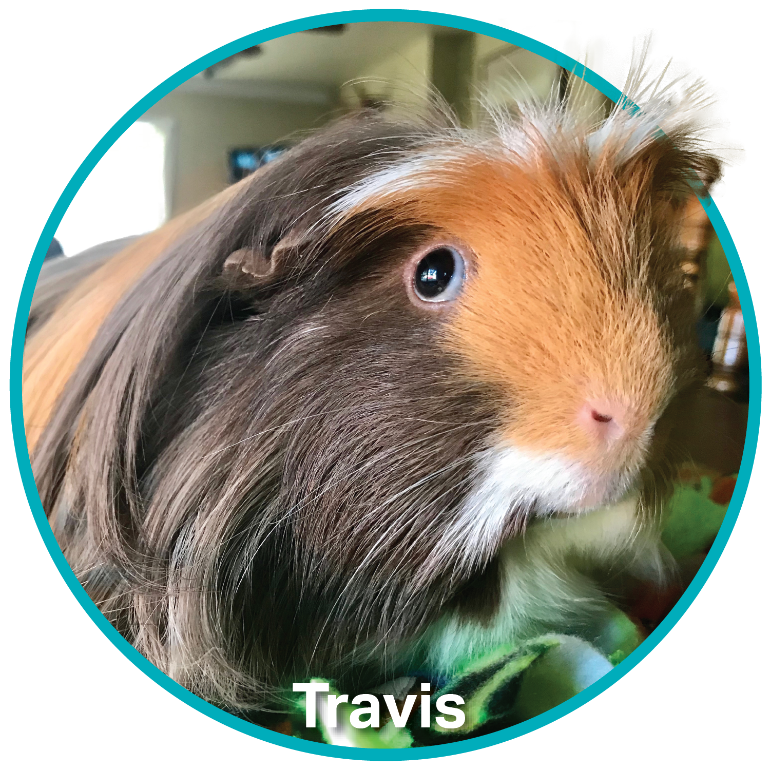 Travis-Spokespet-Cricle.png